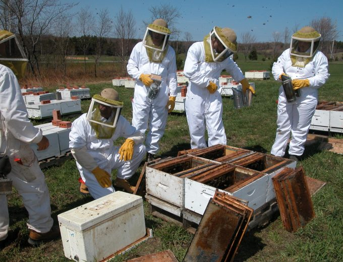 Groupe d'étudiants en apiculture dans un rucher