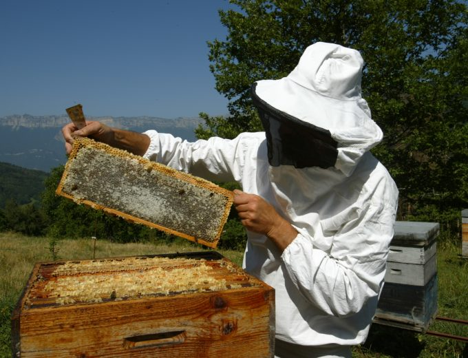 Apiculteur travaillant dans une ruche