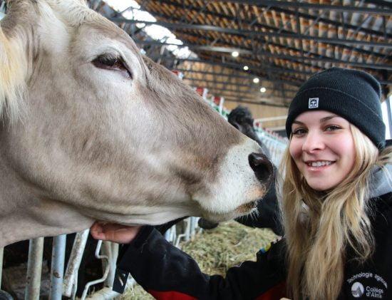 Étudiante près d'une vache