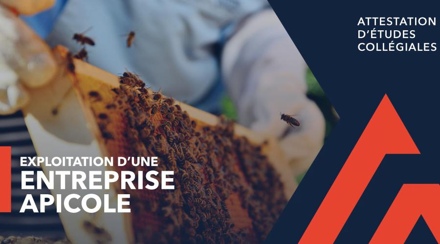 AEC - Exploitation d'une entreprise apicole